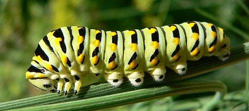 caterpillar-7-27-051